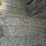Oat Straw Web