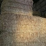 Wheat Straw Web